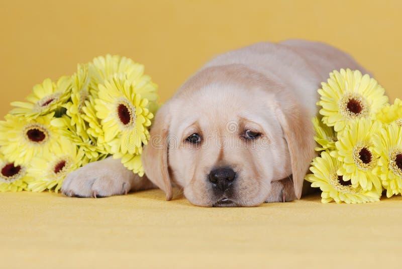 Welpe mit gelben Blumen lizenzfreie stockfotografie