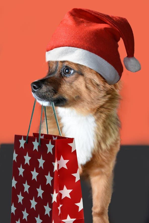 Welpe mit Weihnachtsmann-Hut wünscht frohe Weihnachten stockfotografie