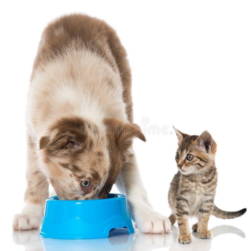 Welpe und Kätzchen lizenzfreie stockbilder
