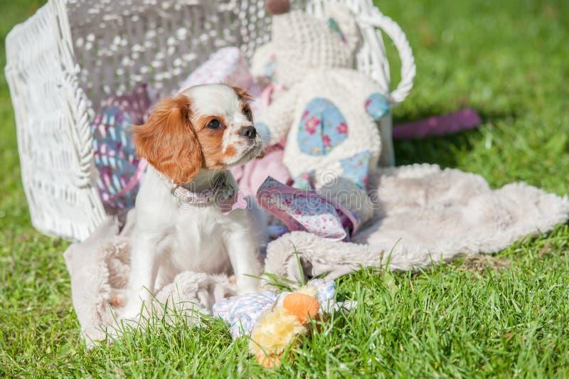 Welpen-Picknick stockfoto