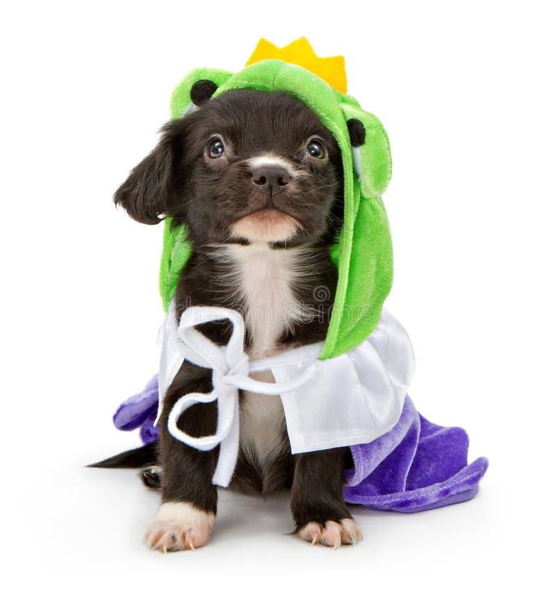 Welpen-tragende Frosch-Prinzausstattung lizenzfreies stockbild
