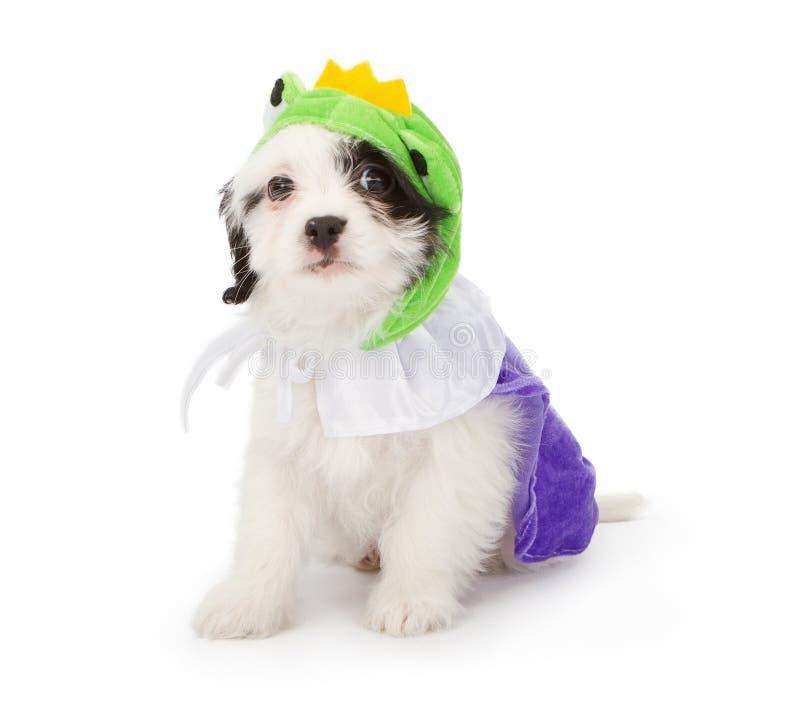 Welpen-tragender Frosch-Prinz Costume stockfoto