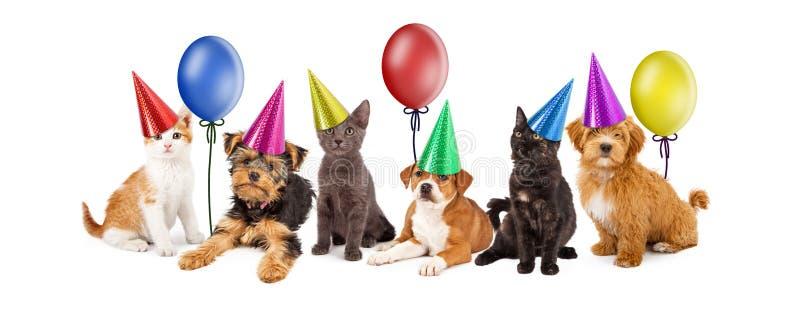 Welpen und Kätzchen in den Partei-Hüten mit Ballonen lizenzfreie stockfotografie