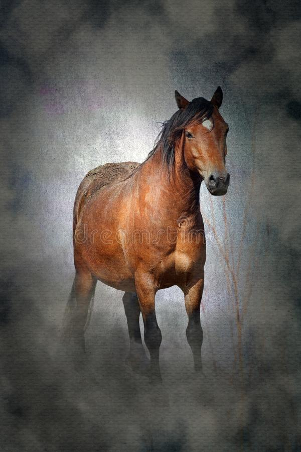 Welsh cob pony. Horse with a moody misty, grungy texture background royalty free stock photography