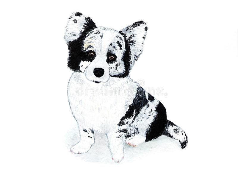 Welsh corgi cardigan, terrier. Watercolor illustration. stock photos
