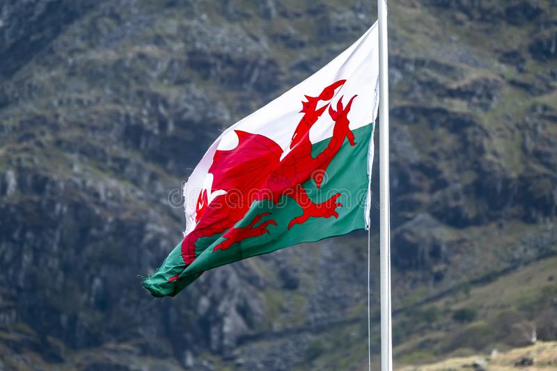 Welsh flag waving in the beautiful landscape of Llanberis, Snowdonia in Wales at the lake padarn stock photo