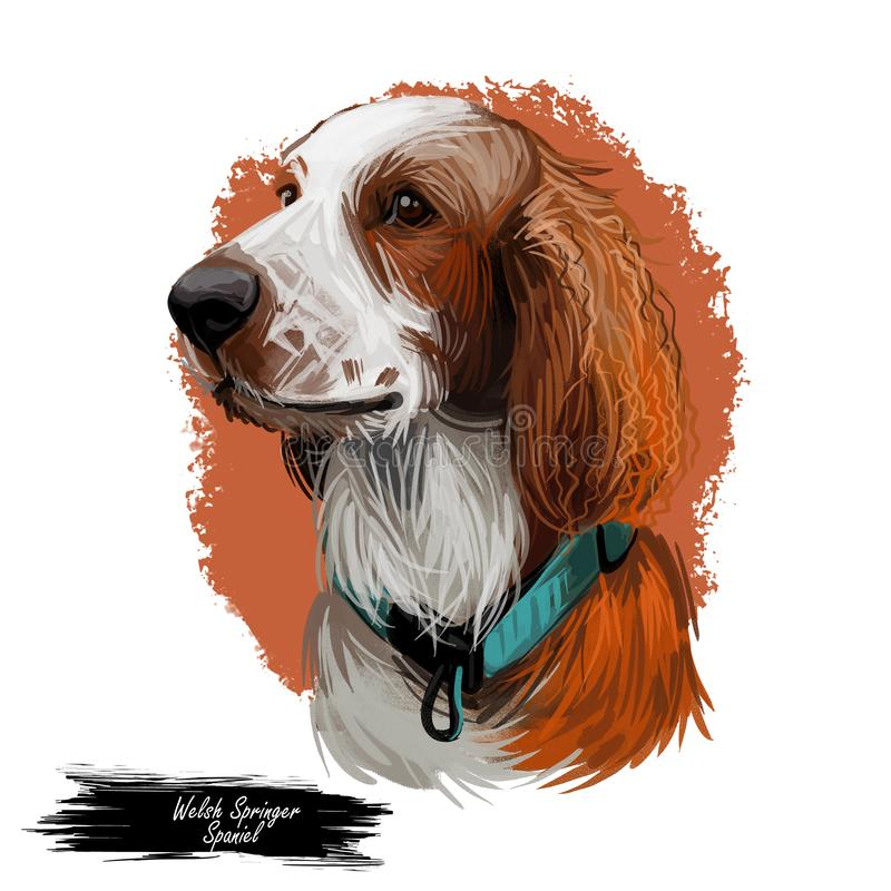 Welsh Springer or Cocker Spaniel dog breed portrait isolated on white. Digital art illustration, animal watercolor drawing of hand royalty free illustration