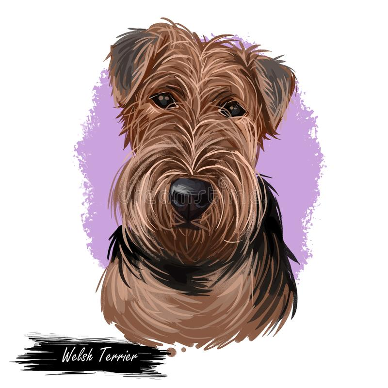 Welsh Terrier dog breed portrait isolated on white. Digital art illustration, animal watercolor drawing of hand drawn doggy for royalty free illustration