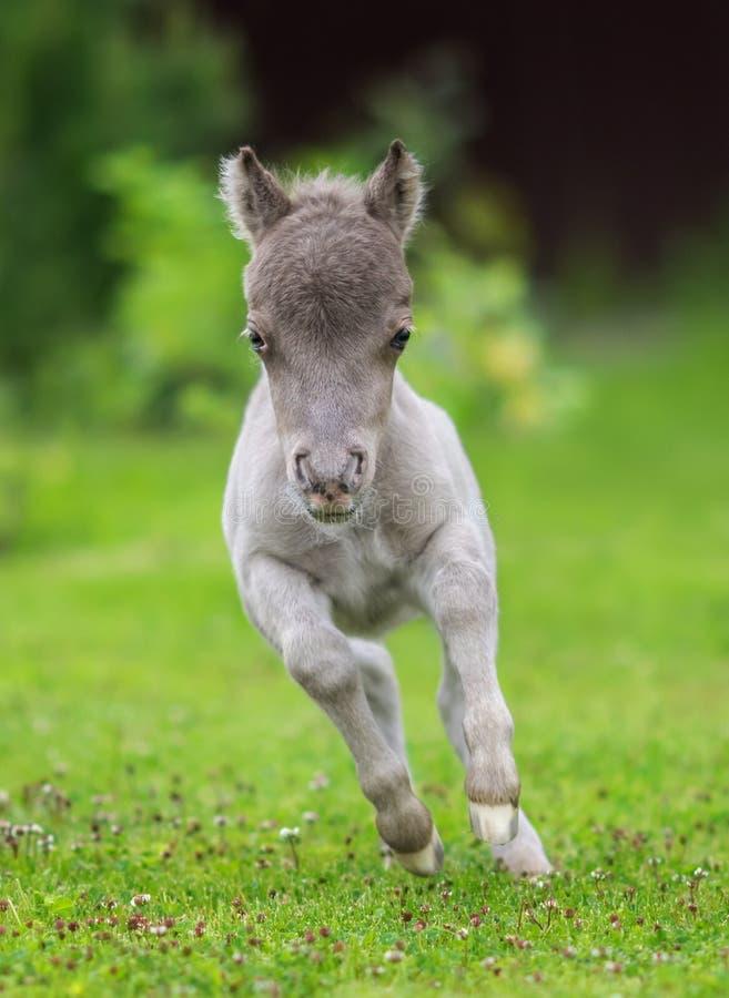 Kleinste Pferd