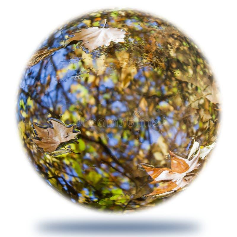 Welt von einigem verlässt über dem Wasser stockbild