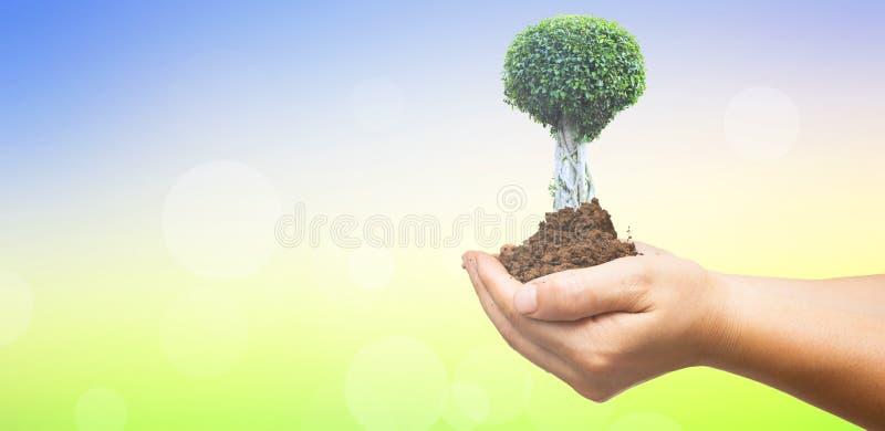Weltumwelttagkonzept: Menschliche Hände, die großen Baum über grünem Waldhintergrund halten stockfoto