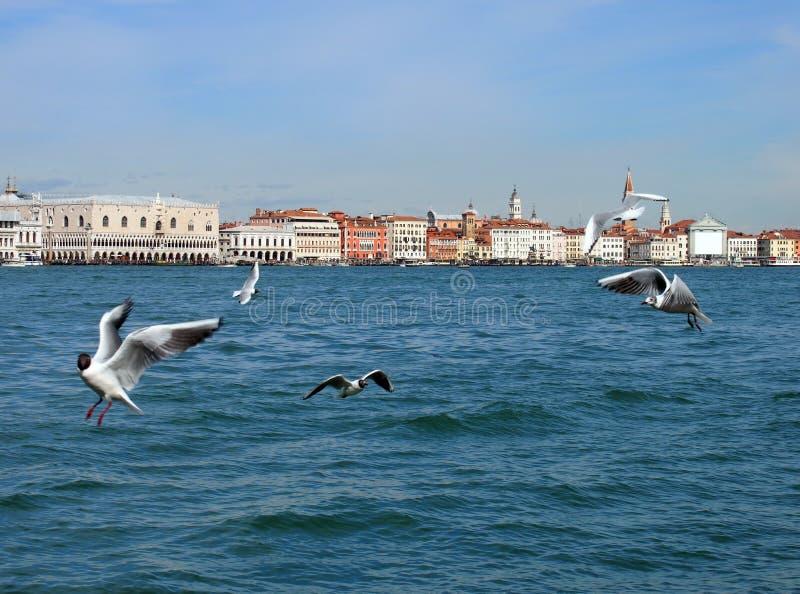 Wenecja od morza z latającymi seaguls zdjęcie stock