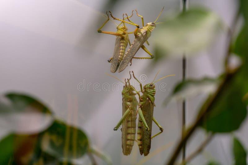 Wenen, Oostenrijk - 25 Februari 2019: Insect in de dierentuin van Wenen Schonbrunn royalty-vrije stock afbeelding