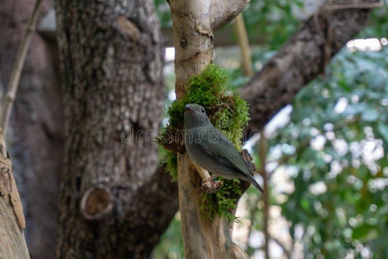 Wenen, Oostenrijk - 25 Februari 2019: Vogel in de dierentuin van Wenen Schonbrunn stock fotografie
