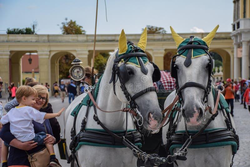 Wenen, Oostenrijk, 15 September, 2019 - nTourist die beelden nemen en nCarriagepaarden van in Schonbrunn strelen stock afbeeldingen