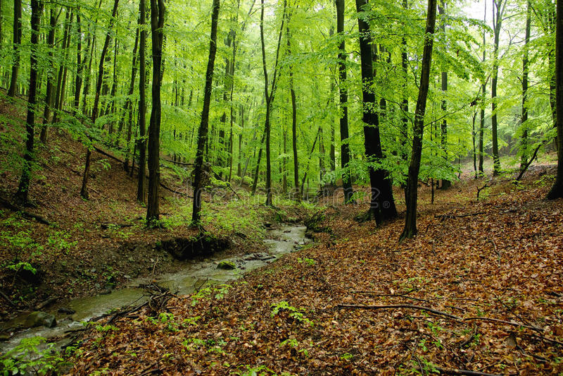 Wenig Bach in Forest Glade lizenzfreie stockbilder