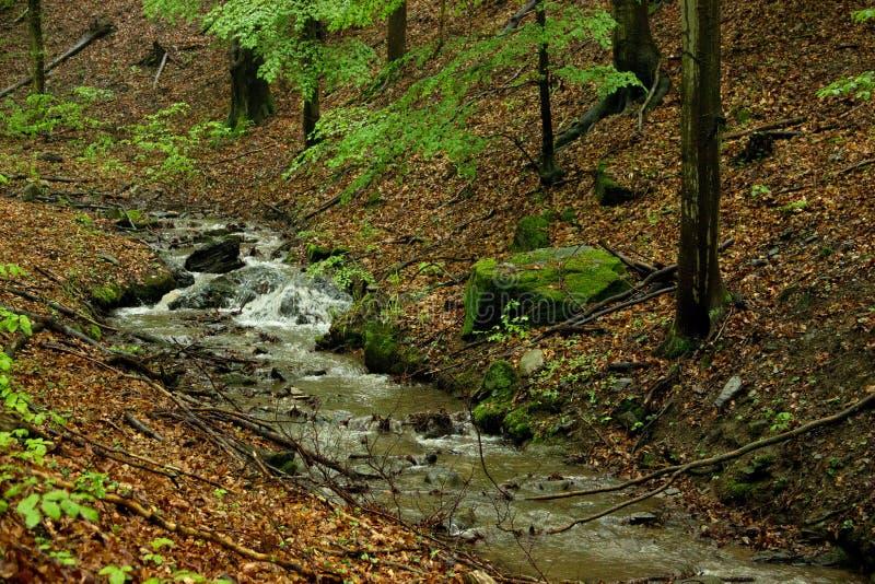 Wenig Bach im Wald stockfotografie
