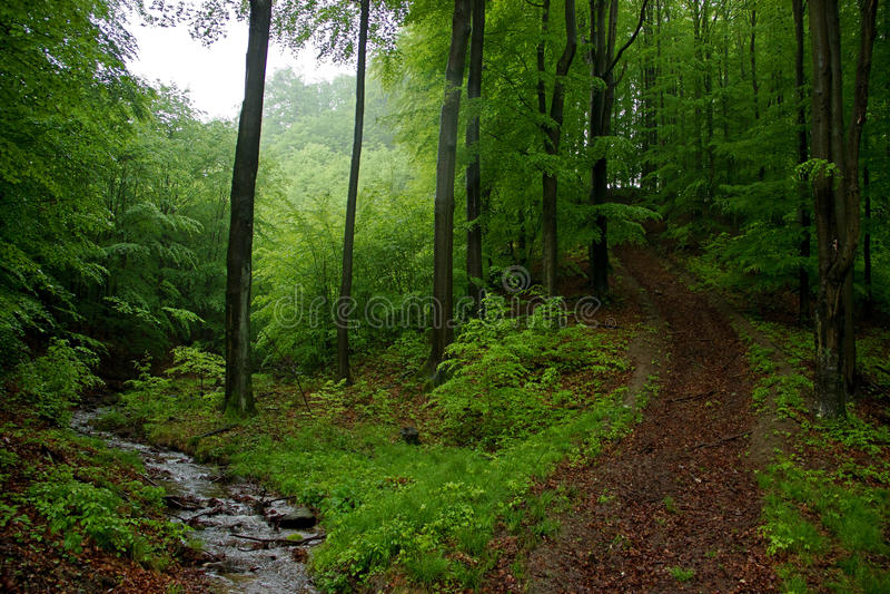 Wenig Bach mit Felsen und Bypath im Wald lizenzfreies stockfoto