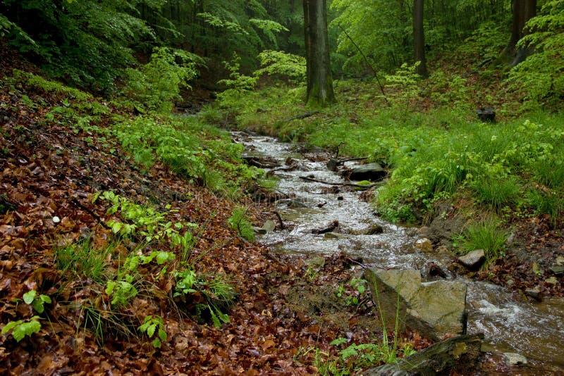 Wenig Bach mit Felsen und Stumpf-Holz stockfotografie