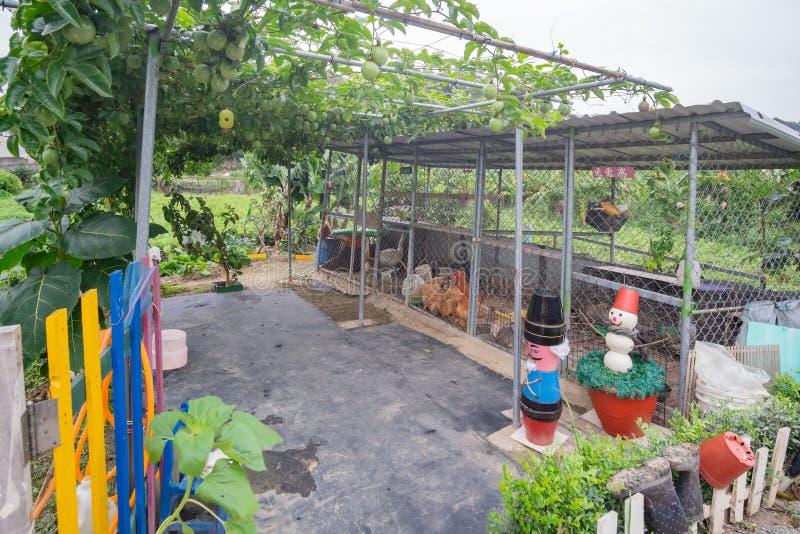 Wenig Bauernhof und Maracujaobstbaum hinter dem bunten Mini-Markt 7-11 lizenzfreies stockbild