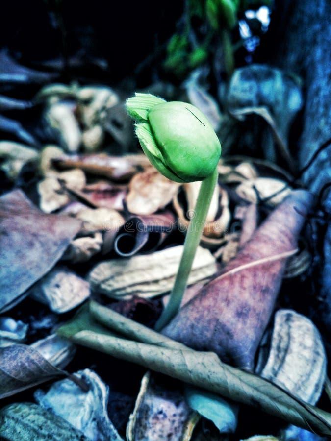 Wenig Baum in den Welten lizenzfreie stockfotos