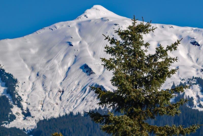 Wenig Baum, großer Berg lizenzfreie stockbilder