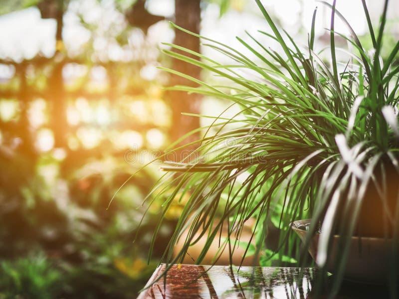 Wenig Baum mit Licht lizenzfreie stockbilder