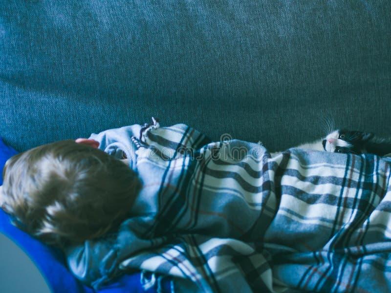 Wenig blonder Junge, der mit einer kleinen Katze schläft lizenzfreie stockfotos