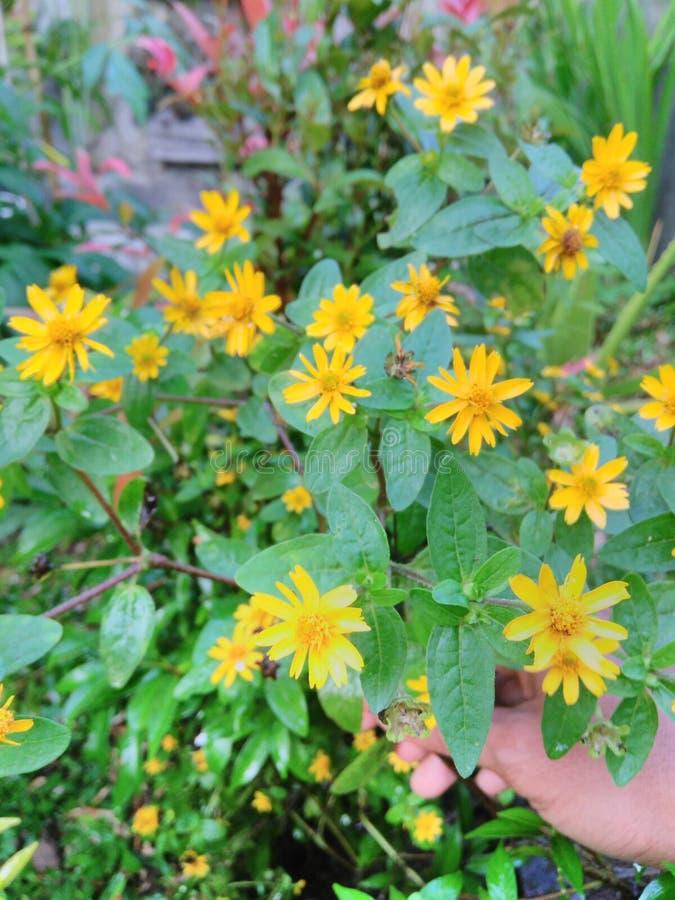 Wenig Blume stockbilder