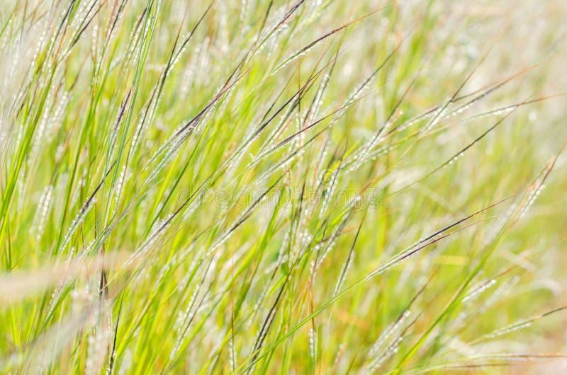 Wenig Blume stockfoto