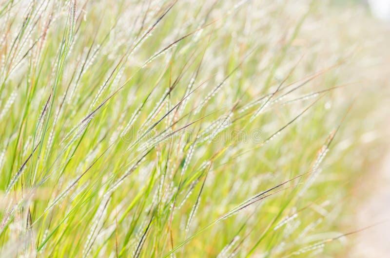 Wenig Blume lizenzfreie stockfotografie