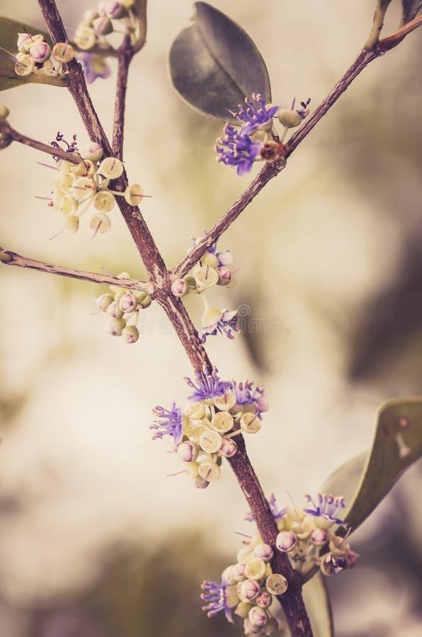 Wenig Blumenweinlese stockbild