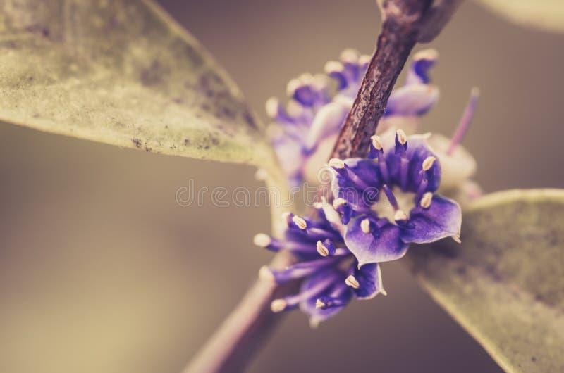 Wenig Blumenweinlese stockfotos