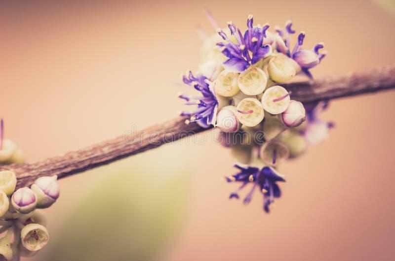 Wenig Blumenweinlese stockbilder