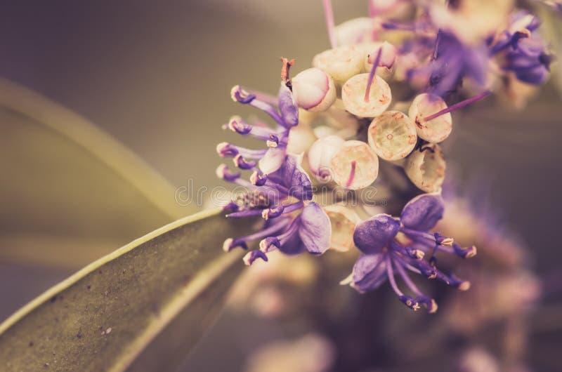 Wenig Blumenweinlese lizenzfreie stockfotos