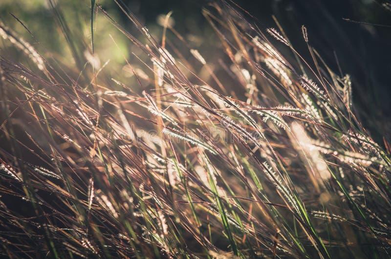 Wenig Blumenweinlese lizenzfreie stockfotografie
