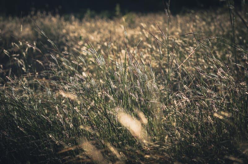Wenig Blumenweinlese lizenzfreie stockbilder