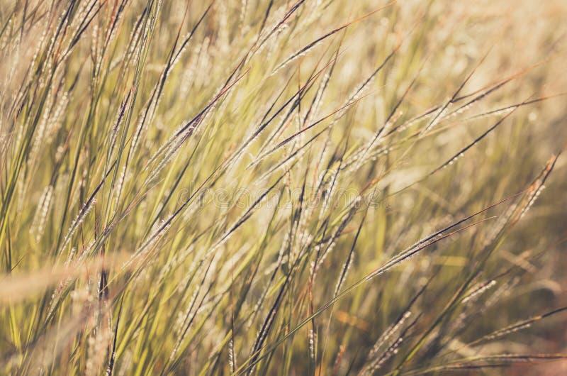 Wenig Blumenweinlese stockfoto