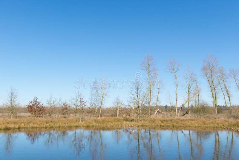 Wenig Fenn in Holland lizenzfreies stockfoto