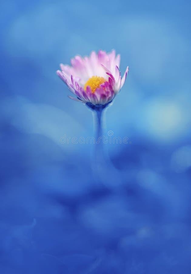 Wenig Gänseblümchen witj blaues backround lizenzfreies stockbild