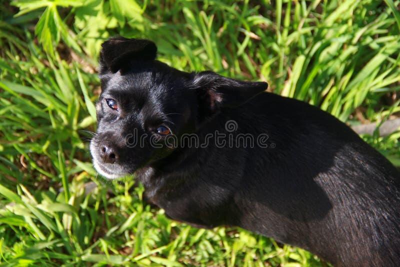 Wenig Hund, der im Gras sitzt stockfoto