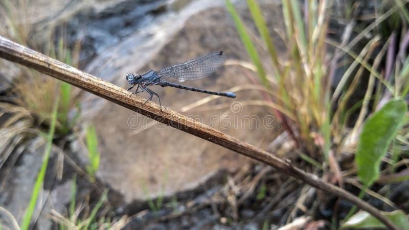 Wenig Insekten, die Natur in den Bergen recht machen stockfoto