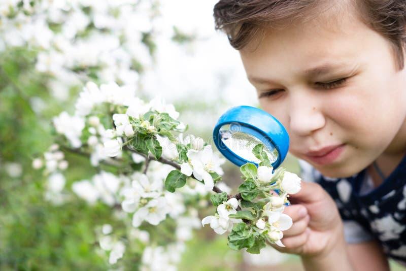 Wenig Junge, der Blume durch Vergr??erungsglas betrachtet stockfotografie
