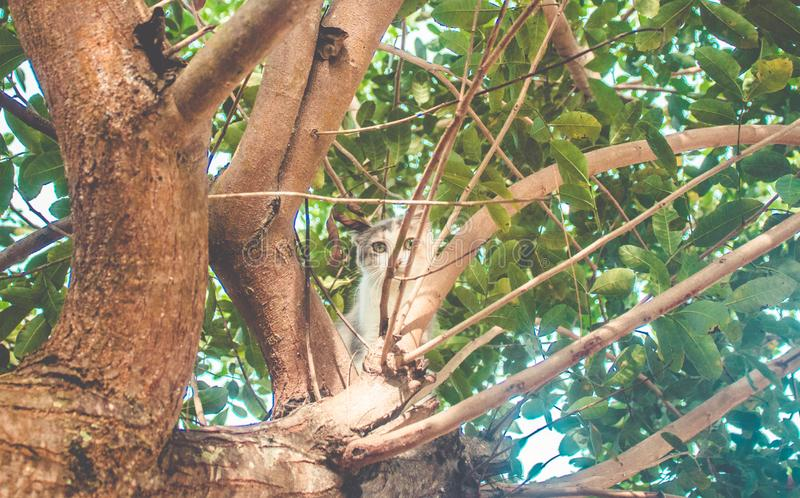 Wenig junge Katze, die auf dem Baum unten schaut zur Kamera klettert lizenzfreie stockbilder