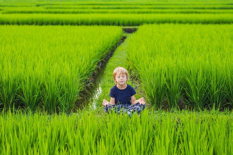 Wenig Jungenpraxisyoga auf einem Reisgebiet, im Freien Gymnastische ?bungen lizenzfreie stockfotografie