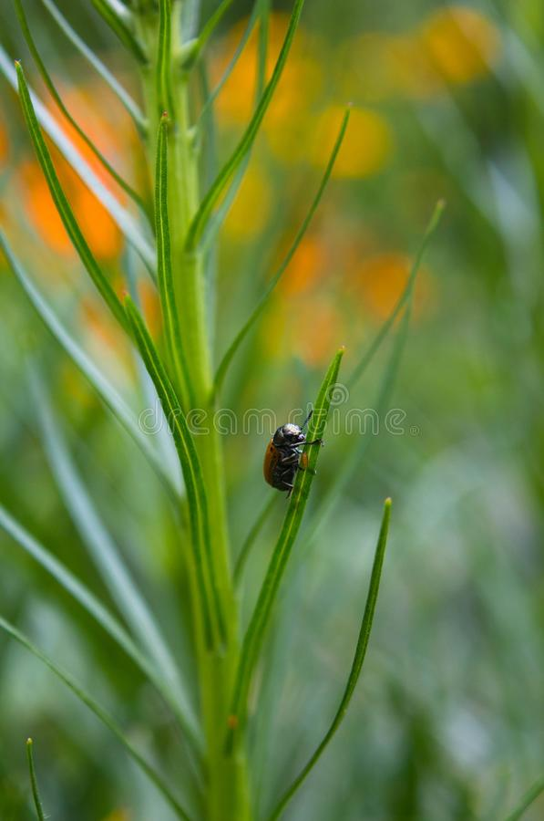 Wenig Käfer auf einem Stamm stockfotos
