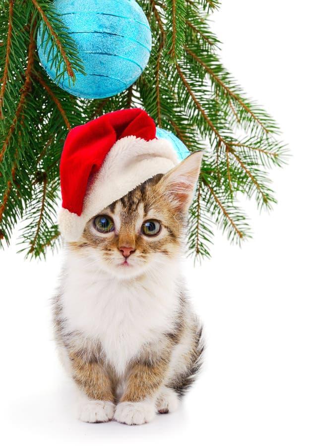 Wenig Kätzchen mit Weihnachtsdekorationen lizenzfreie stockbilder