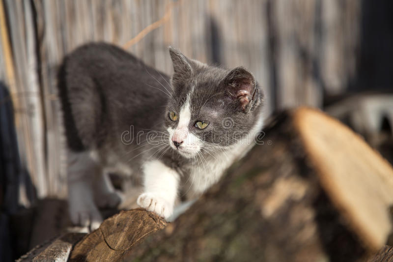Wenig Katzenschauen stockbilder