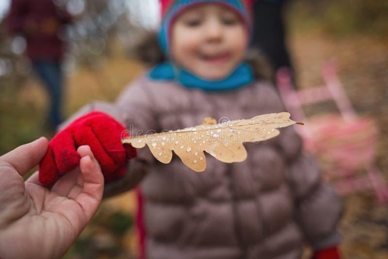 Wenig Kind, Baby, das draußen Blätter im Herbst auf dem Naturweg spielt Nahaufnahme der Eichenblatt-Regentropfen in der Hand stockfotos