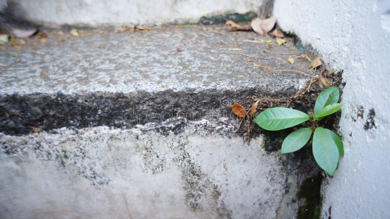 Wenig Leben des Pflänzchens stockbild